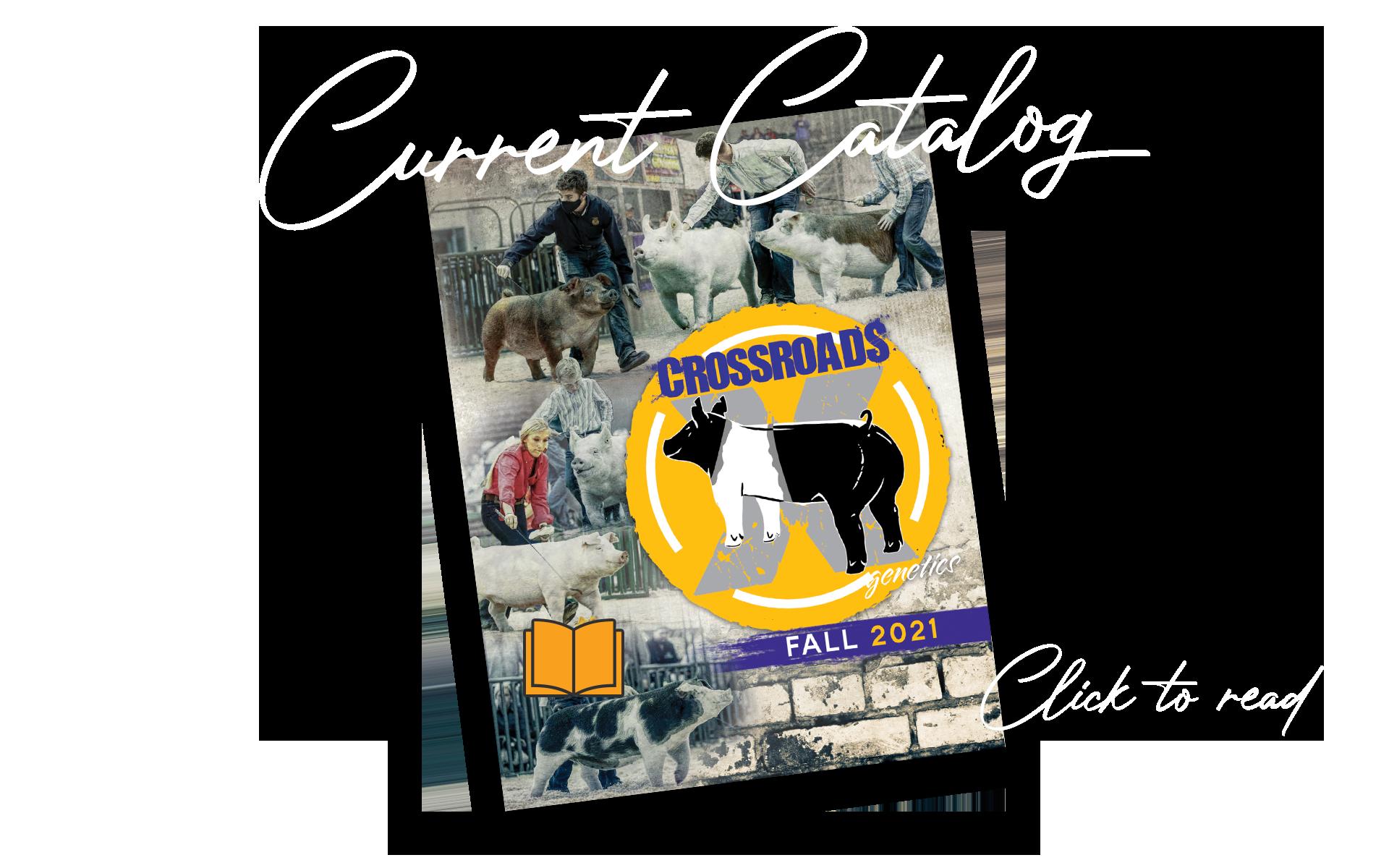 2020 Current Boar Catalog